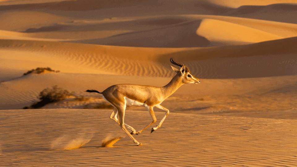 Emirates Group celebrates World Wildlife Day