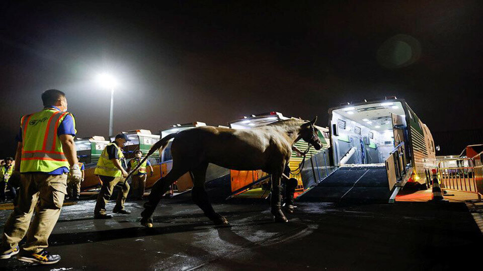 Hundreds_of_horses_flying_to_Tokyo_Olympic_Games_for_contest.jpg